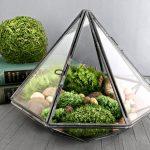 garden terrarium kit